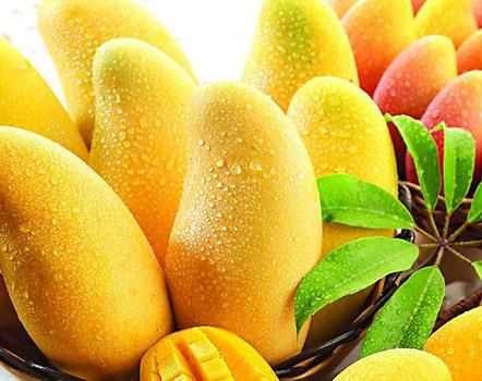 Nam Doc Mai  Thai Mango Tree