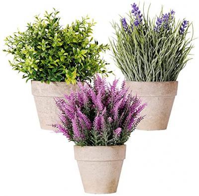Indoor / Outdoor Fragrant shrub